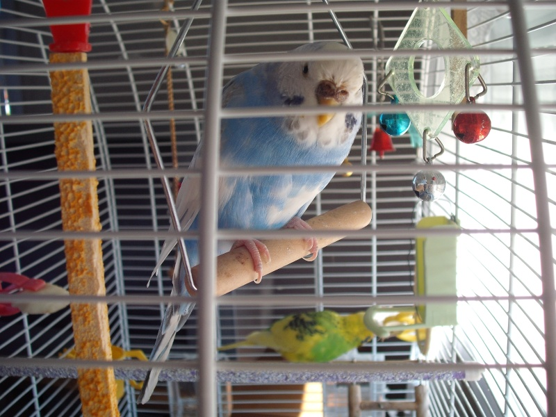mes 3 oiseaux ^^ 12710