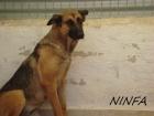 NYNFA X BA - 4 ANS EN FA CHEZ NATHALIE (94)-R-VV-LBC-SC-F Ninfa_10