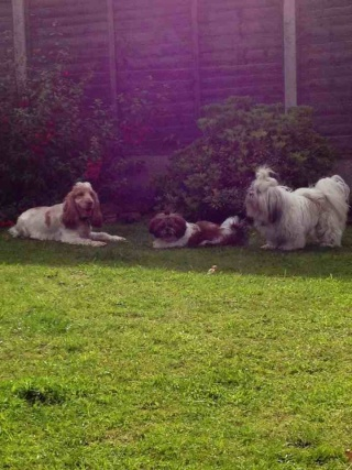 Tillie and friends 48033010