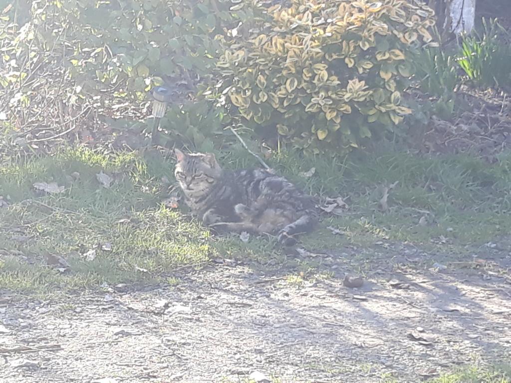 Choupette, femelle type européenne tigrée estimée née 03/03/2012 - Page 3 20190214