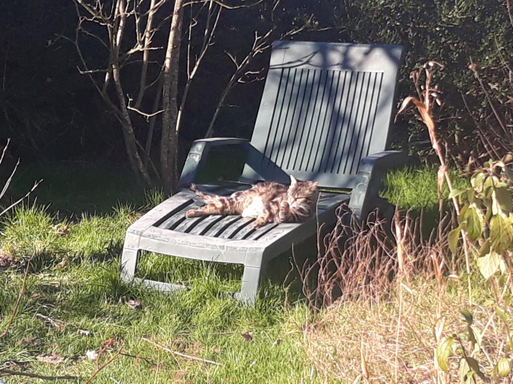 Choupette, femelle type européenne tigrée estimée née 03/03/2012 - Page 3 20190215