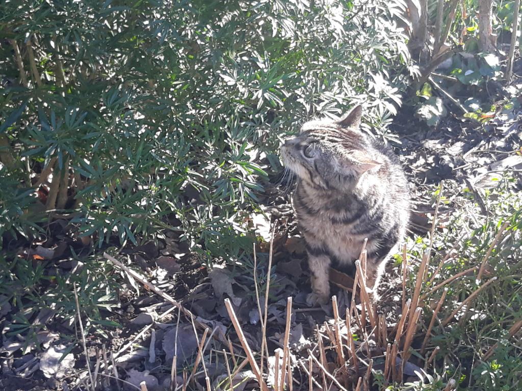 Choupette, femelle type européenne tigrée estimée née 03/03/2012 - Page 3 20190216