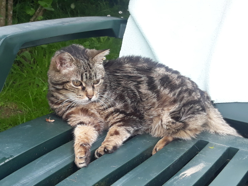 Choupette, femelle type européenne tigrée estimée née 03/03/2012 - Page 3 20190515