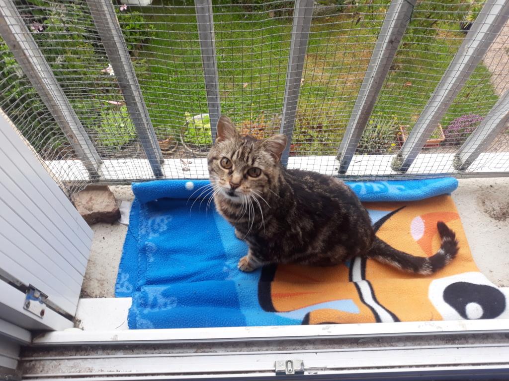 Choupette, femelle type européenne tigrée estimée née 03/03/2012 - Page 4 20190612