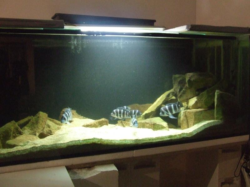 projet pour une tanganyika room ... loufoque25 Dscf5110