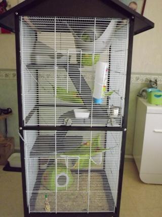 Voici la cage de mes pepettes Cage_010