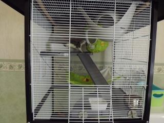 Voici la cage de mes pepettes Cage_011