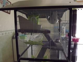 Voici la cage de mes pepettes Cage_012