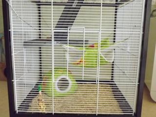 Voici la cage de mes pepettes Cage_013