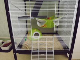 Voici la cage de mes pepettes Cage_014