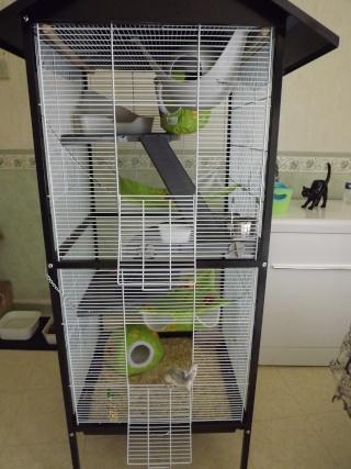 Voici la cage de mes pepettes Cage_015