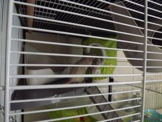 Voici la cage de mes pepettes Cage_016