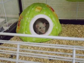 Voici la cage de mes pepettes Cage_017