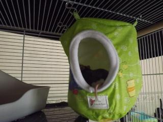 Voici la cage de mes pepettes Cage_021