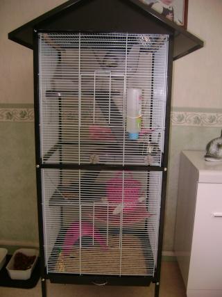 Voici la cage de mes pepettes Rate_011