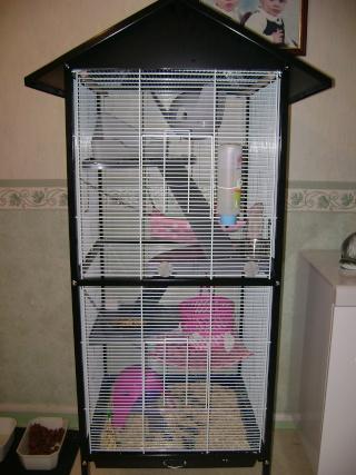 Voici la cage de mes pepettes Rate_012