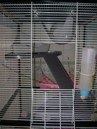 Voici la cage de mes pepettes Rate_013