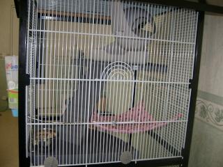 Voici la cage de mes pepettes Rate_014