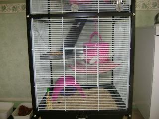 Voici la cage de mes pepettes Rate_015