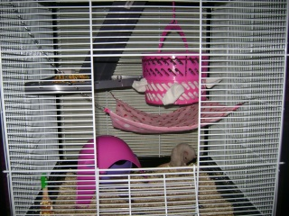 Voici la cage de mes pepettes Rate_016