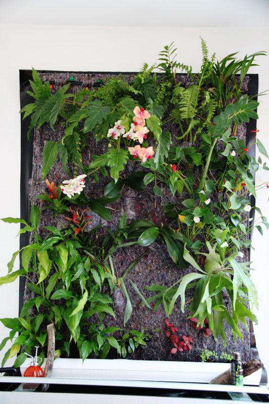 Mur végétal avec aquarium de 320L ---> Paludarium - Page 2 Img_9010