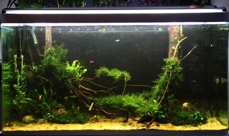 Mur végétal avec aquarium de 320L ---> Paludarium - Page 2 Img_9110