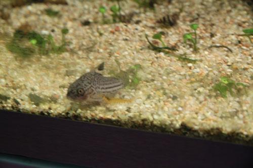 Mur végétal avec aquarium de 320L ---> Paludarium - Page 2 Img_9113