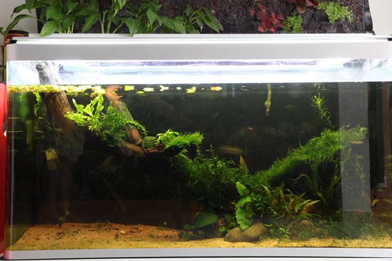 Mur végétal avec aquarium de 320L ---> Paludarium - Page 2 Img_9210