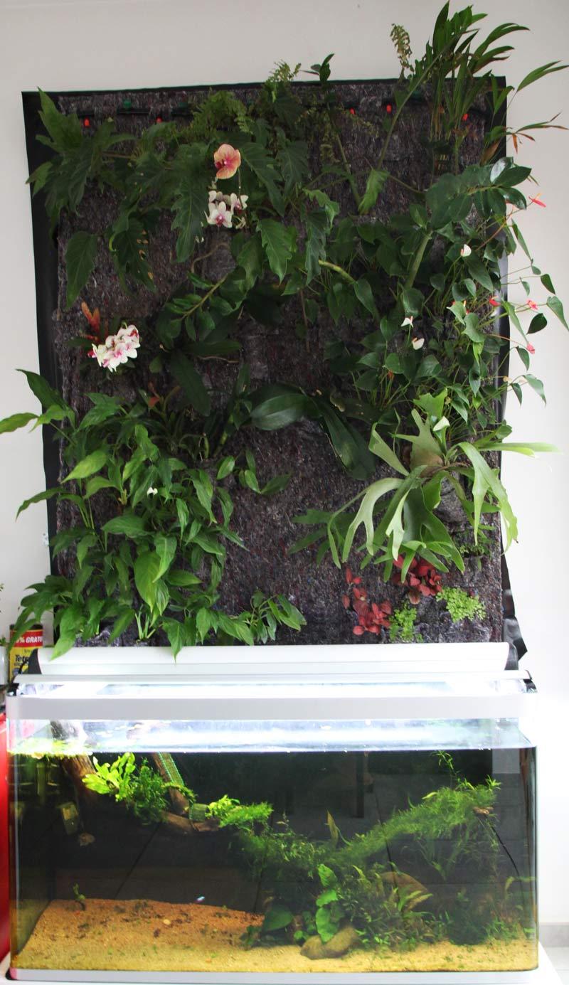 Mur végétal avec aquarium de 320L ---> Paludarium - Page 2 Img_9211