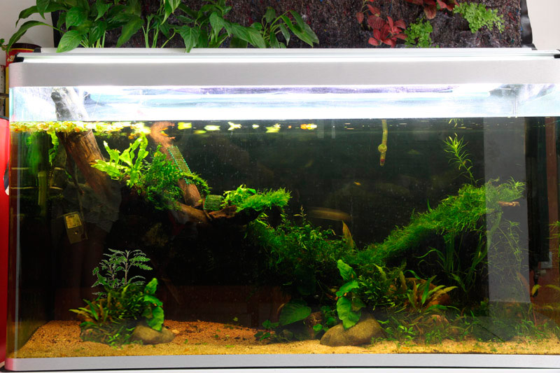 Mur végétal avec aquarium de 320L ---> Paludarium - Page 2 Img_9212