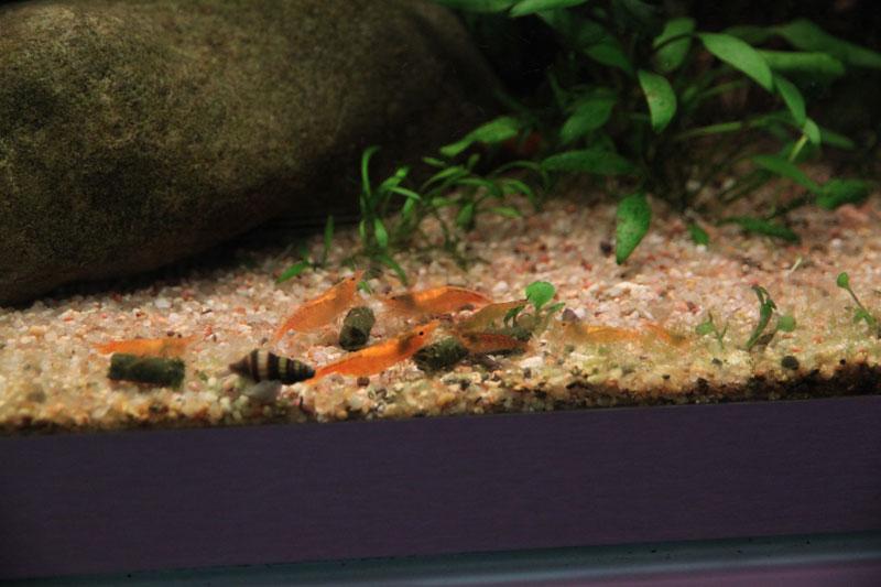 Mur végétal avec aquarium de 320L ---> Paludarium - Page 3 Img_9213