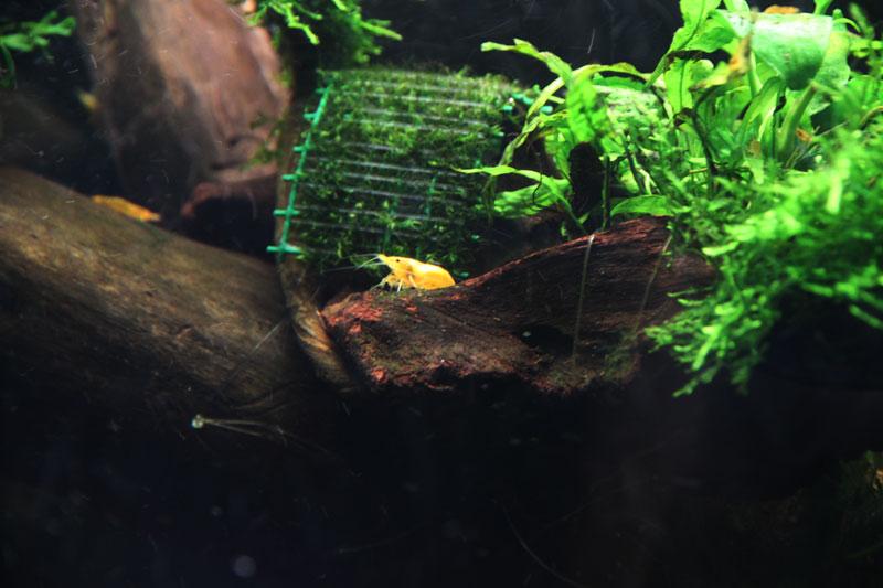 Mur végétal avec aquarium de 320L ---> Paludarium - Page 3 Img_9215