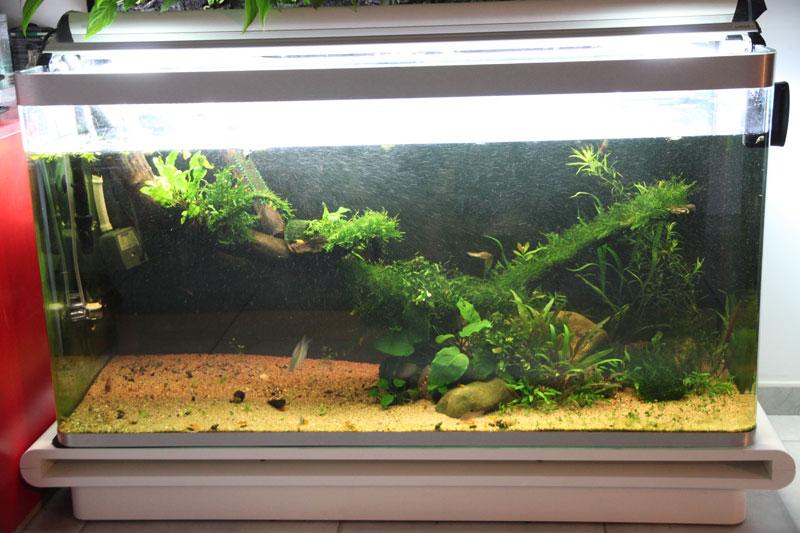 Mur végétal avec aquarium de 320L ---> Paludarium - Page 3 Img_9216