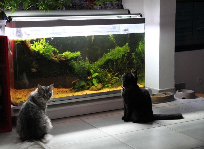 Mur végétal avec aquarium de 320L ---> Paludarium - Page 3 Img_9217