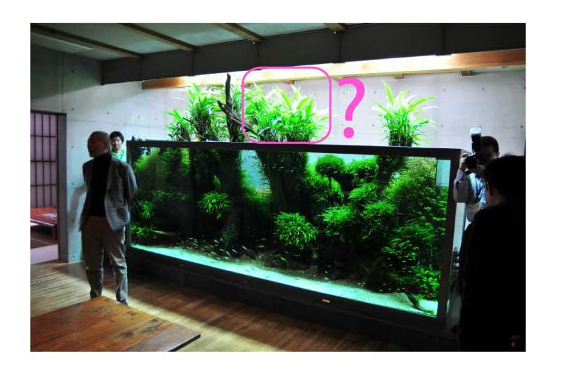 Mur végétal avec aquarium de 320L ---> Paludarium - Page 3 Sans-t10