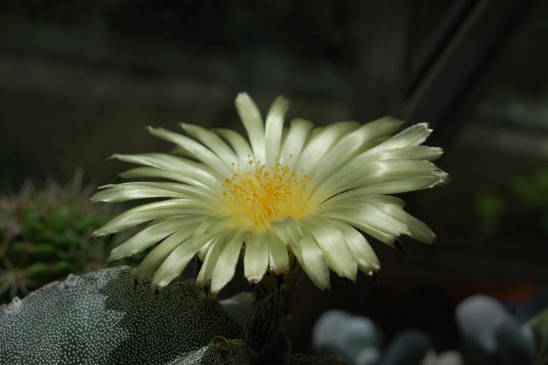 quelques floraisons du jour Dsc_0810