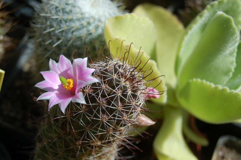 quelques floraisons du jour Dsc_0812