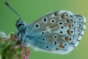 Thème du mois d'août 2013 : les insectes Dsc_1110