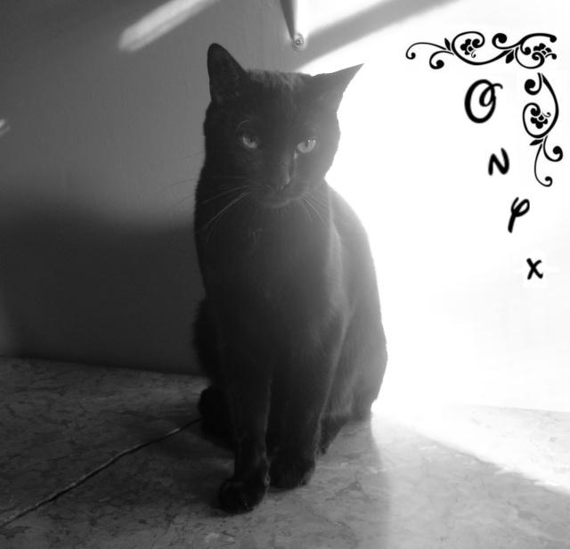 ONYX Dscn5617