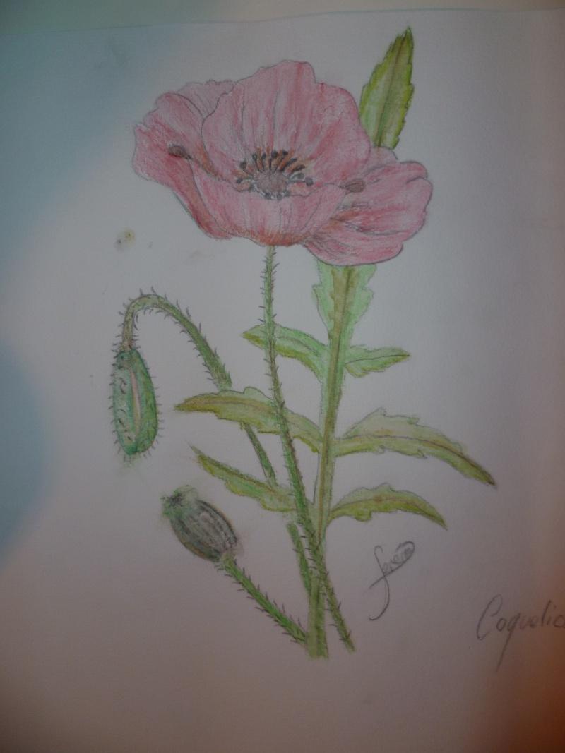 Galerie de buffyandflora  P1020275