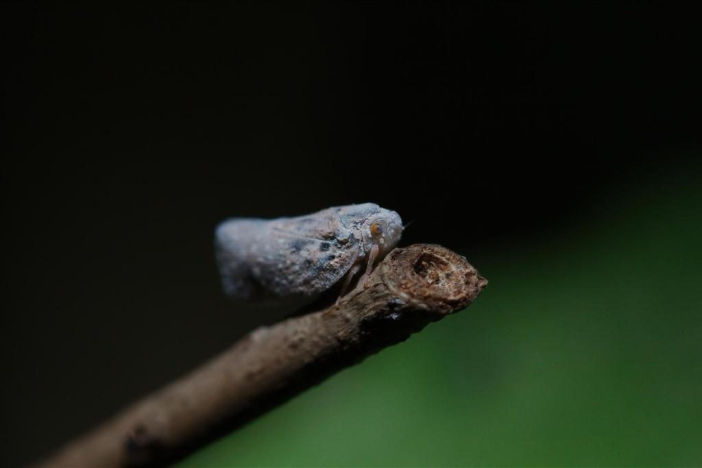 quesito entomoligico (ovvero csa sun sti  zavai) 2012-015