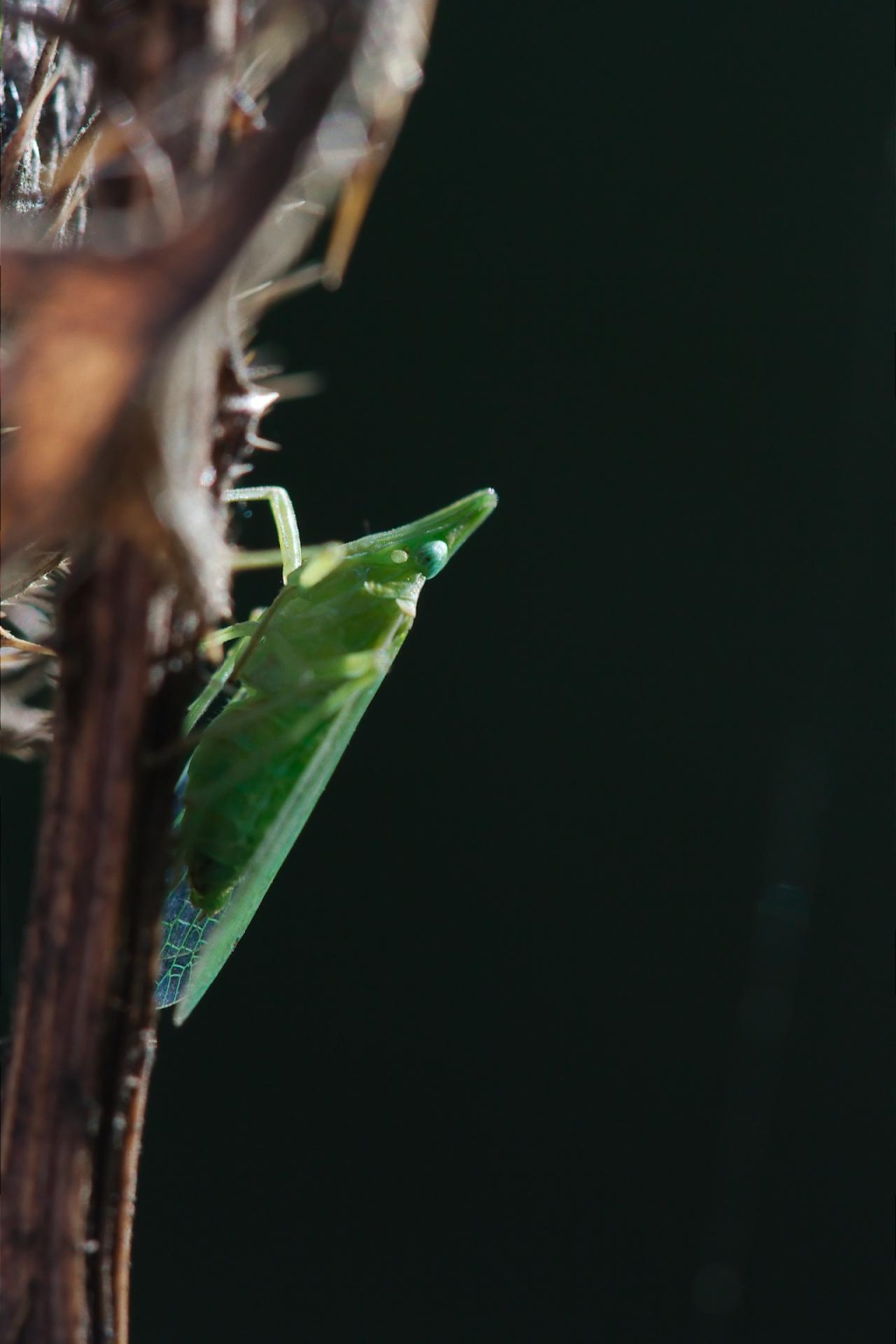 quesito entomoligico (ovvero csa sun sti  zavai) 2012-016