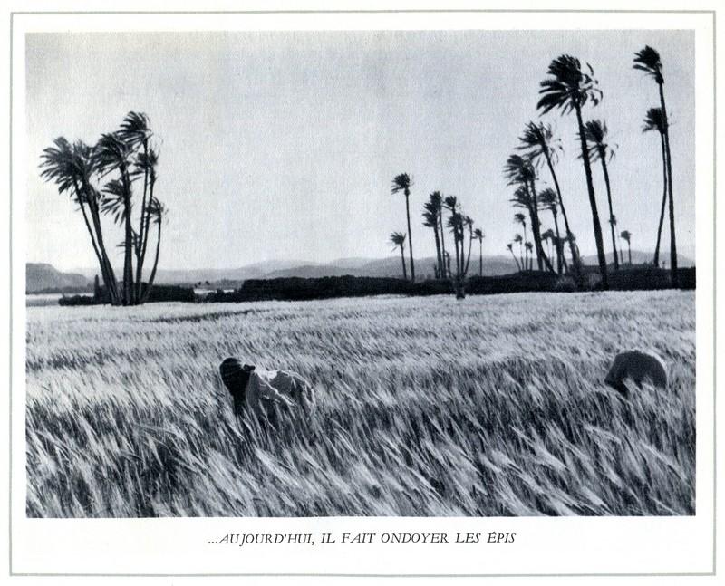 L'Oeuvre de la France au Maroc de 1912 à 1950. - Page 4 Maroc296