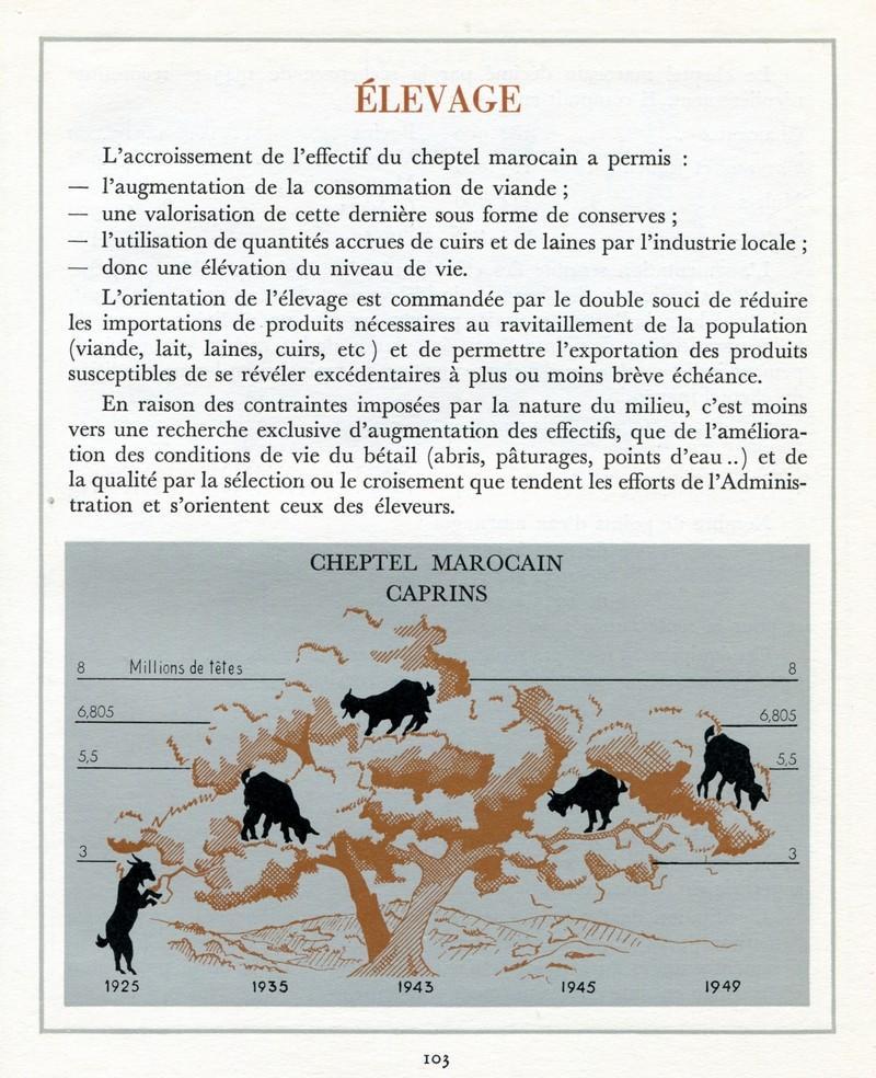 L'Oeuvre de la France au Maroc de 1912 à 1950. - Page 4 Maroc307