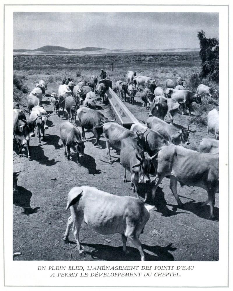 L'Oeuvre de la France au Maroc de 1912 à 1950. - Page 5 Maroc316