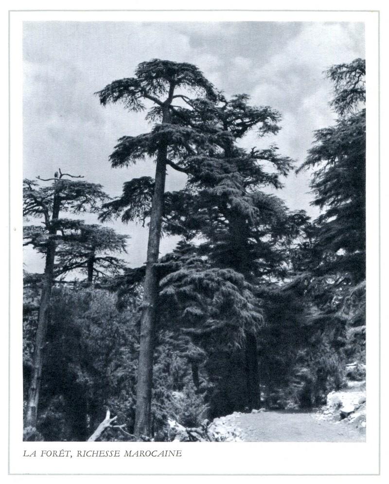 L'Oeuvre de la France au Maroc de 1912 à 1950. - Page 5 Maroc321