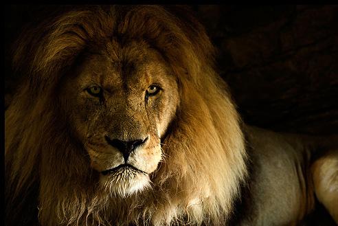 توقييع >> رآيكم مهم  - صفحة 3 Lion10