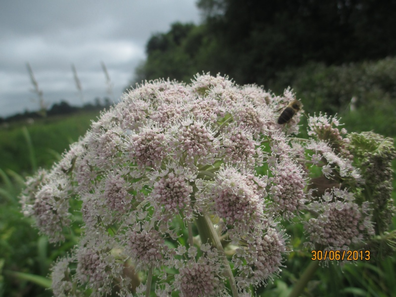 Marais du cotentin et du bessin . Marais15