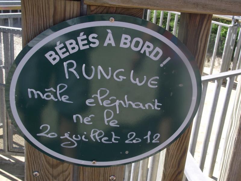 Visite au zoo de Beauval Dscf9210