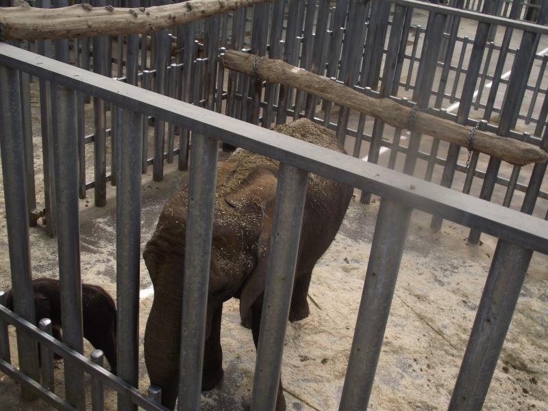 Visite au zoo de Beauval Dscf9211